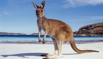 Что нужно и что не нужно делать перед переездом в Австралию